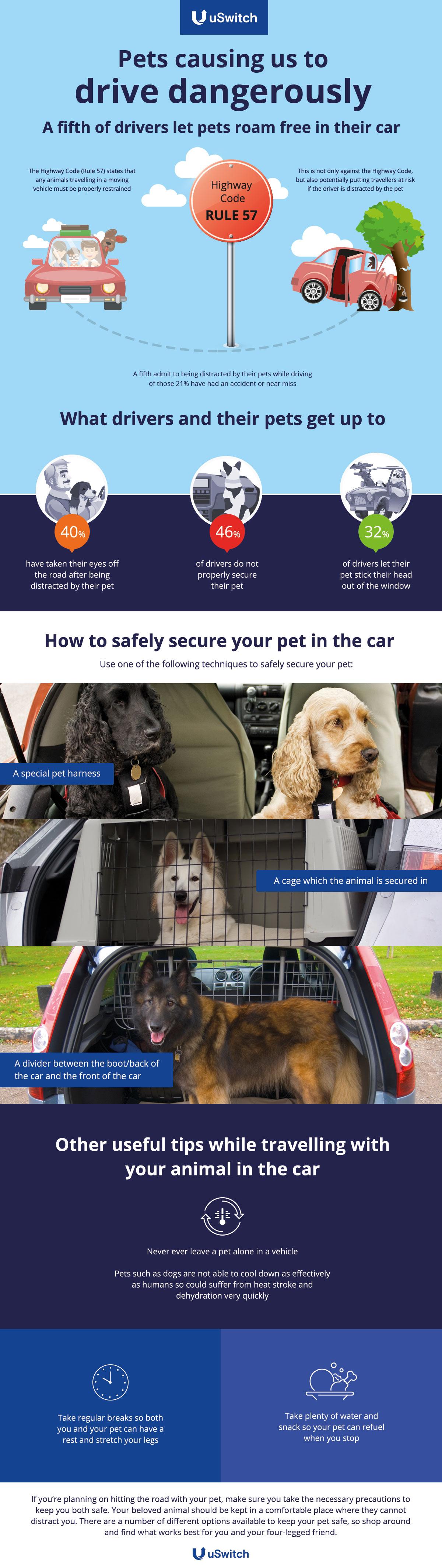 Drive_pets_low_size (2)